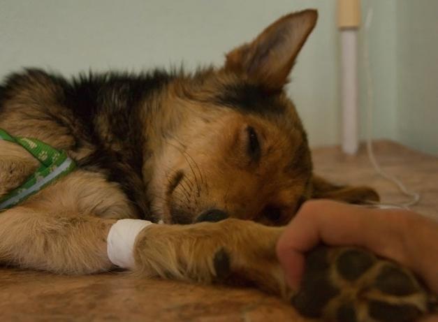 лечение животных капельницей