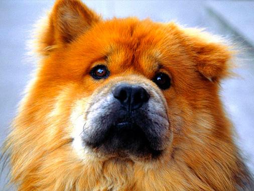 лечение диареи у собак