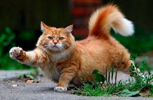 Кастрация котов в Москве