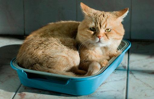 Лечение цистита у кота