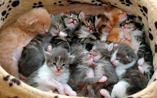 Признаки родов у кошек